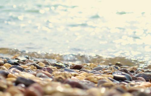 Life below water / Leben unter Wasser
